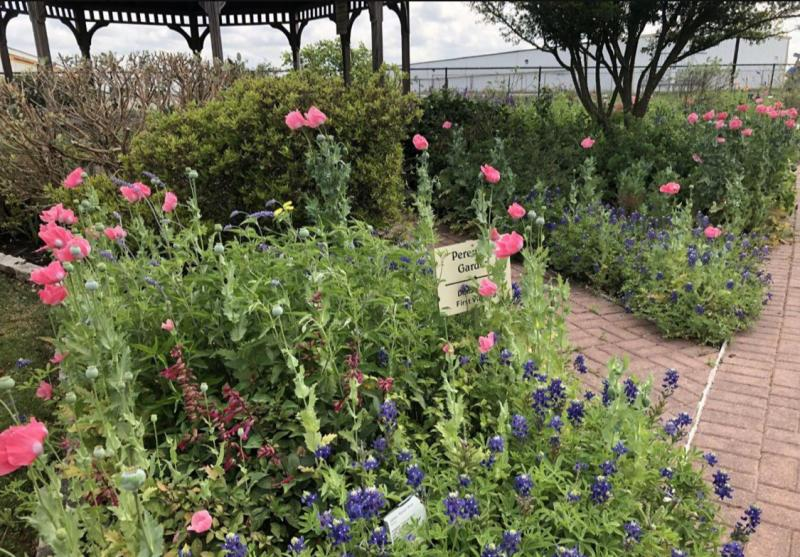 Poppies and Bluebonnets are annuals that re-seed