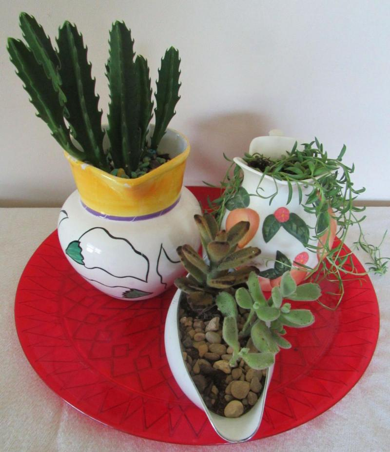 Succulents Dish Gardens Lupe Cook