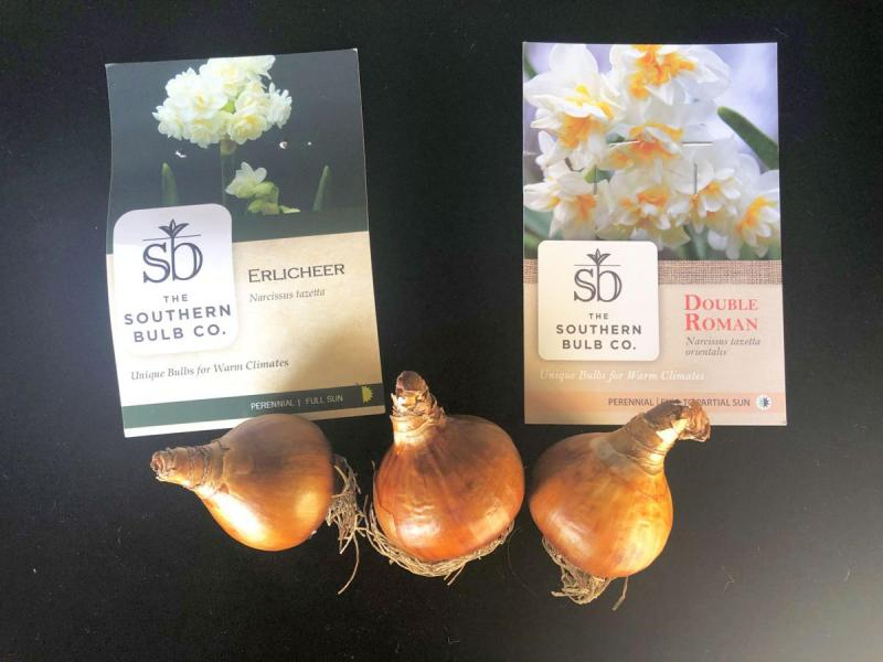 Narcissus bulbs from Southern Bulbs