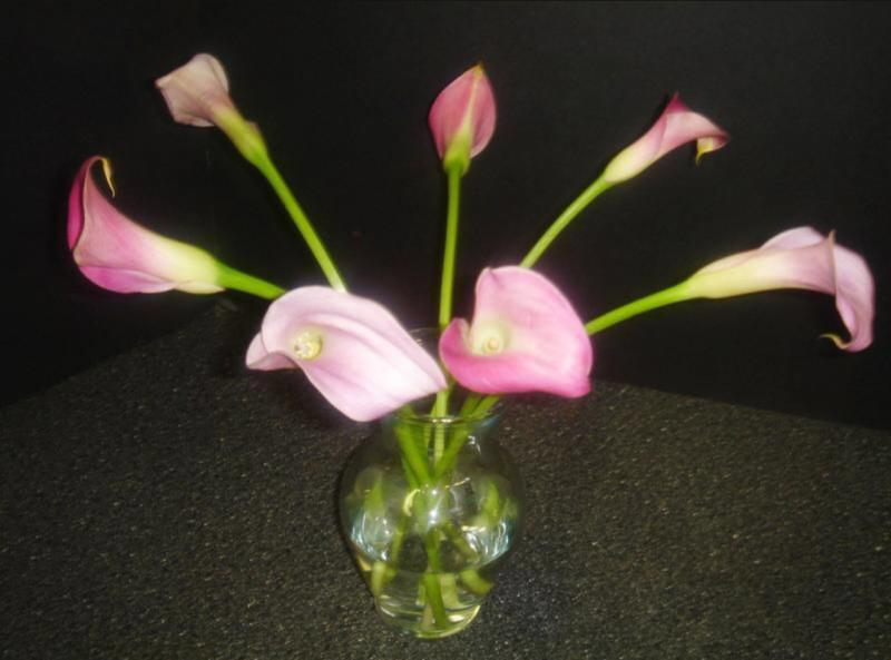 Mini Calla Lilies in pinks and purples at Devereux Gardens
