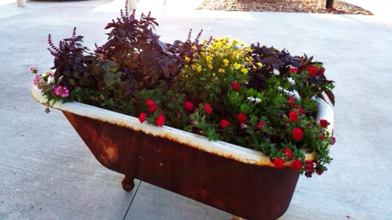 Choose plants with similar sun and water needs for large containers
