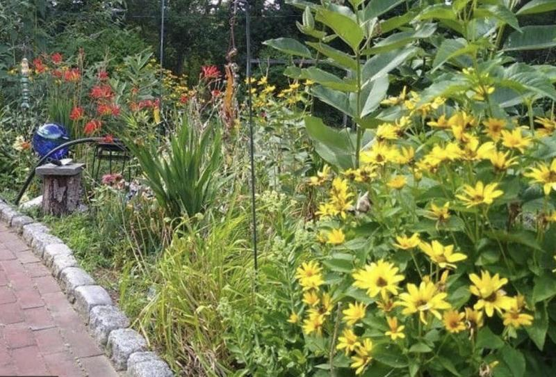 Plants featured in Pollinator Garden