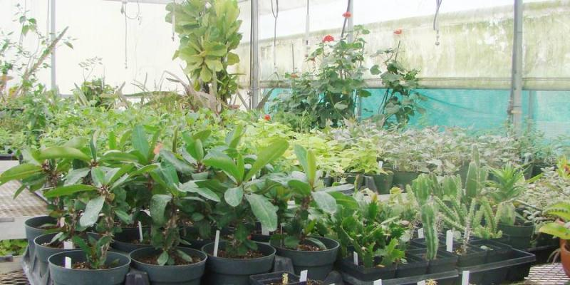 Green in Greenhouse Plant Sale