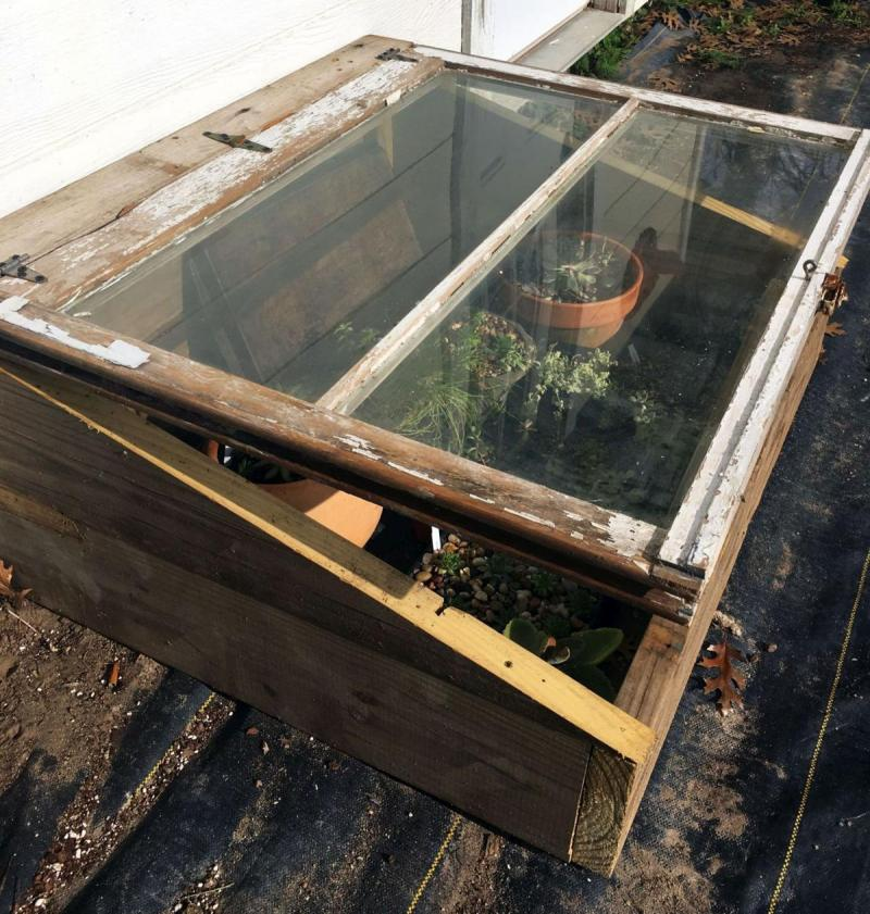 Cold Frame with young annuals