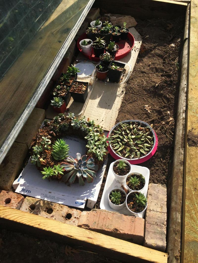 Cold Frame with succulents