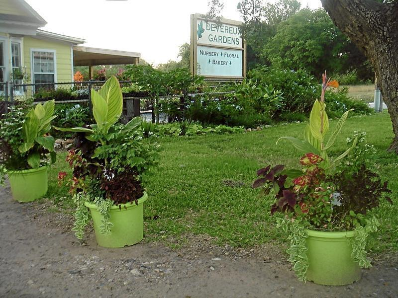 Opened in 2001, Devereux Gardens provides nursery, floral and bakery items