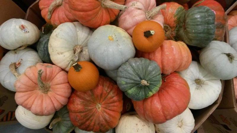Various colors of pumpkins