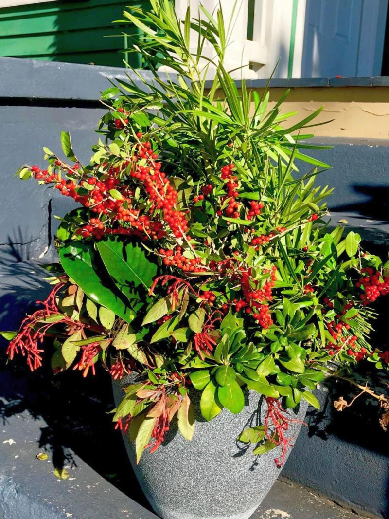 Berries and blooms can spruce up container plants for holidays