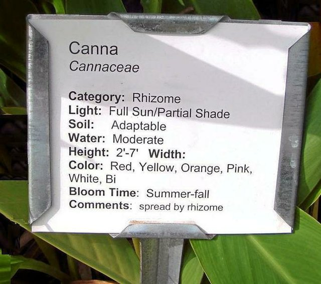 Canna Lily Plant Tag